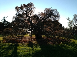 darktreesm