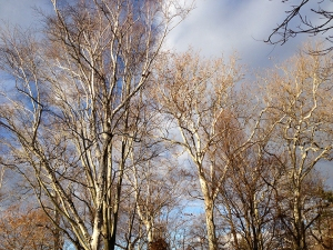 treetopssm