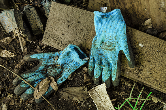 Blue Gloves in the Potting Shed